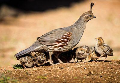 Baby birds face a lot of hazards - Jay's Bird Barn